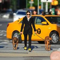 Джессика гуляет с собаками в Сохо: