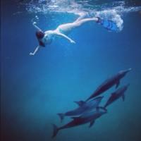 """Миранда выложила фото с подписью """"помоги спасти дельфинов"""""""