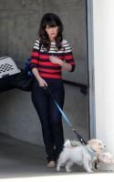 Зоуи Дешанель. Зоуи на прогулке со своими собаками после съёмок.